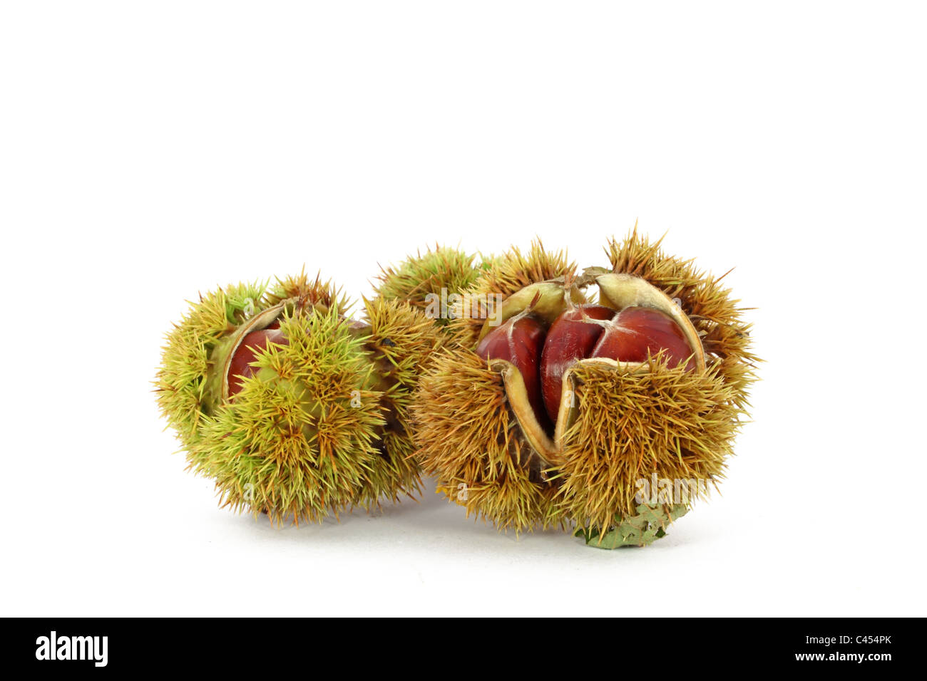 Wild chestnut in shells, isolated - Stock Image