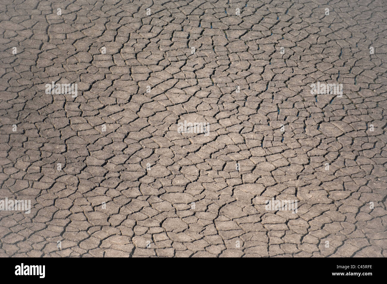 drying cracked earth in drought conditions - Stock Image