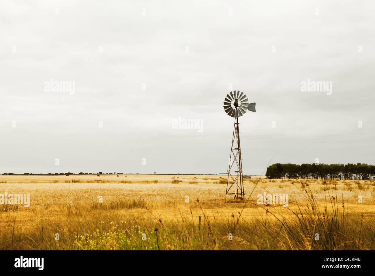 Windmill on pastures near Esperance, Western Australia, Australia - Stock Image