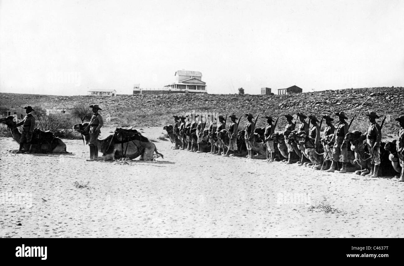 German camel cavalry company of the colonial troops, 1916 - Stock Image