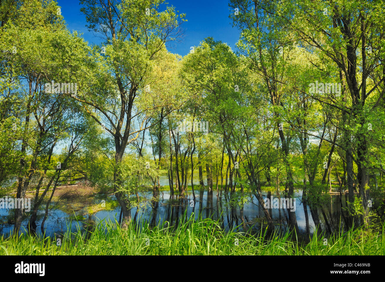 Swamp Wallpaper High Resolution Stock Photography And Images Alamy