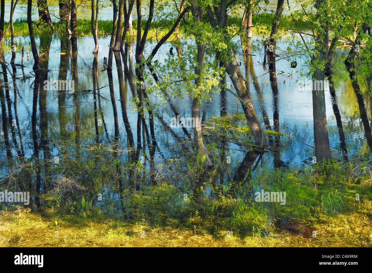 Trees in the swamp - Stock Image