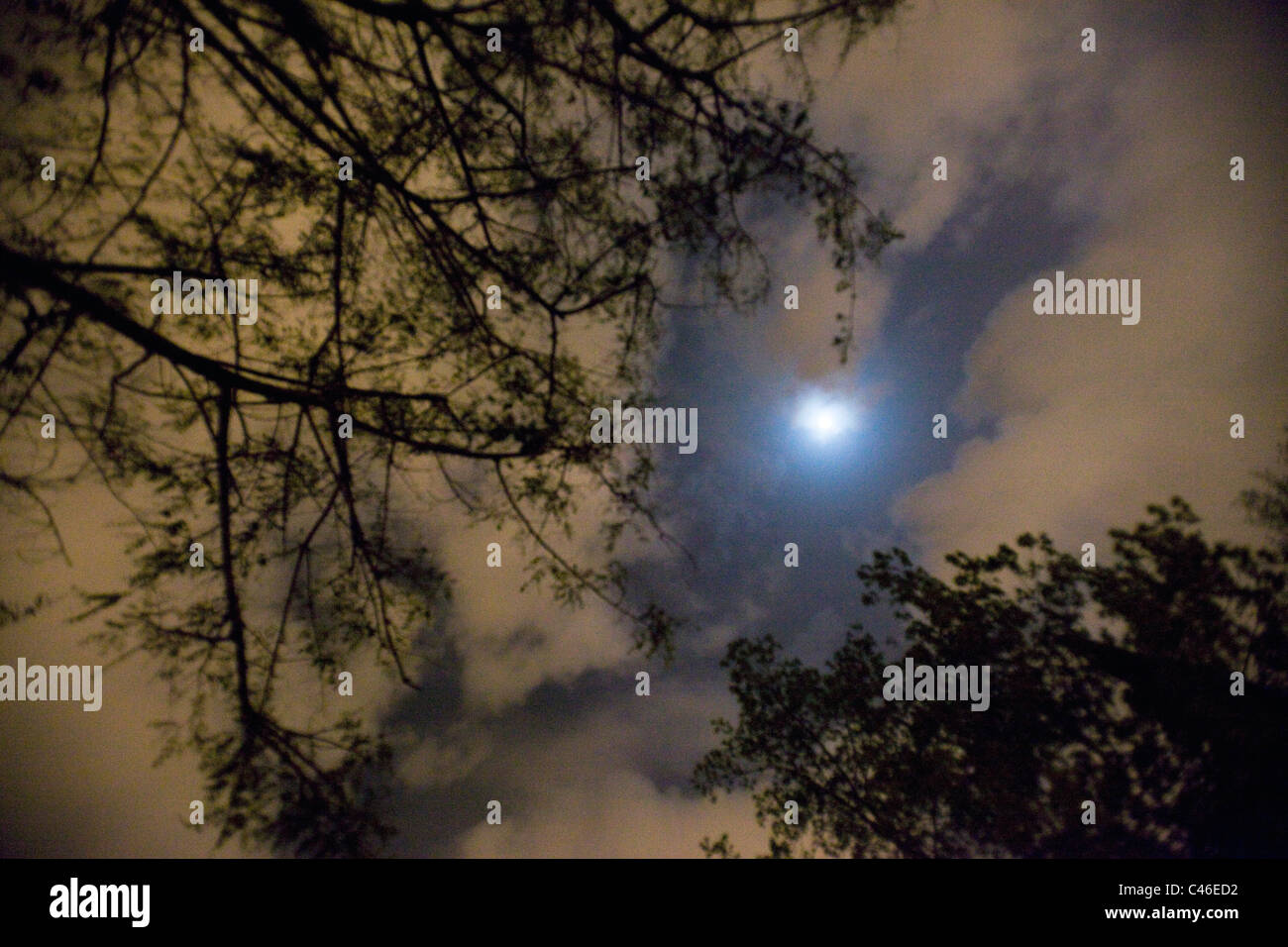 Abstract view of the night's sky - Stock Image