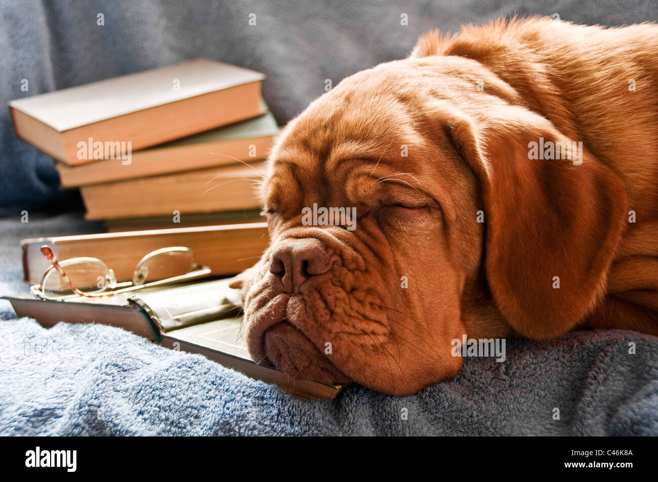 puppy sleeping books stock photos & puppy sleeping books stock