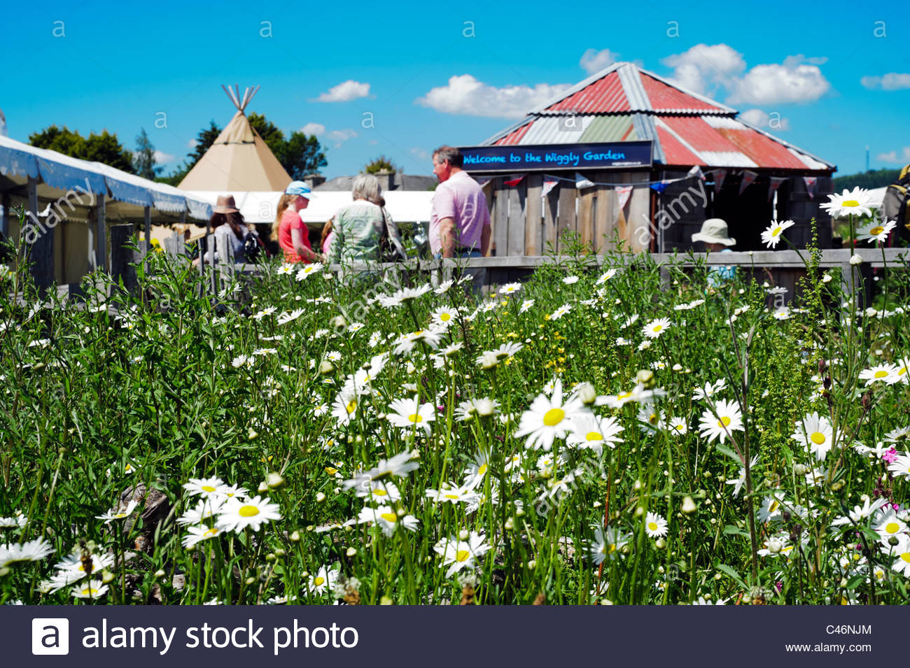 Hay on Wye, Wales, UK. Hay festival wiggly garden with white daisies. - Stock Image