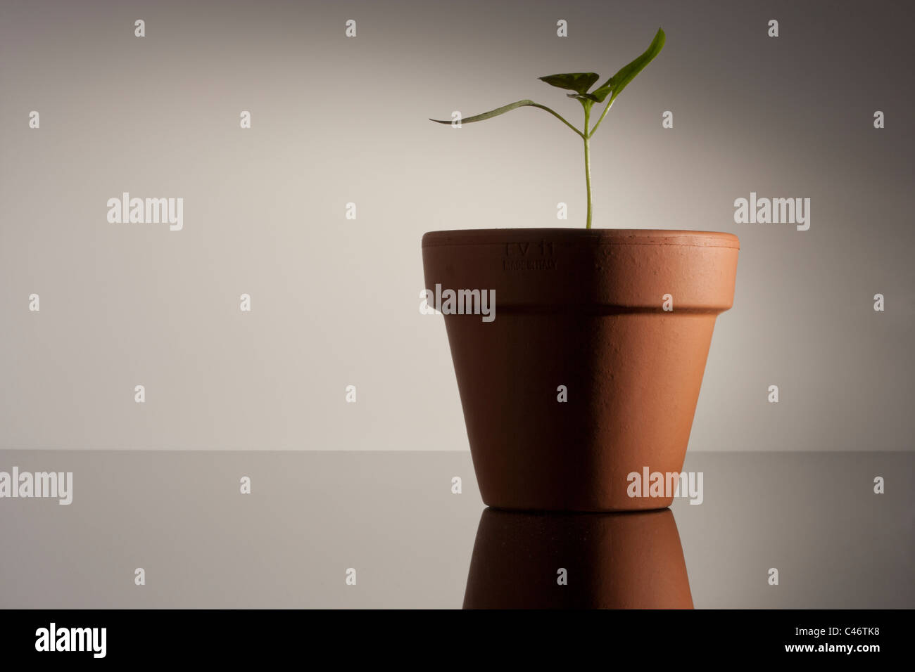 seedling in a terracotta pot Stock Photo