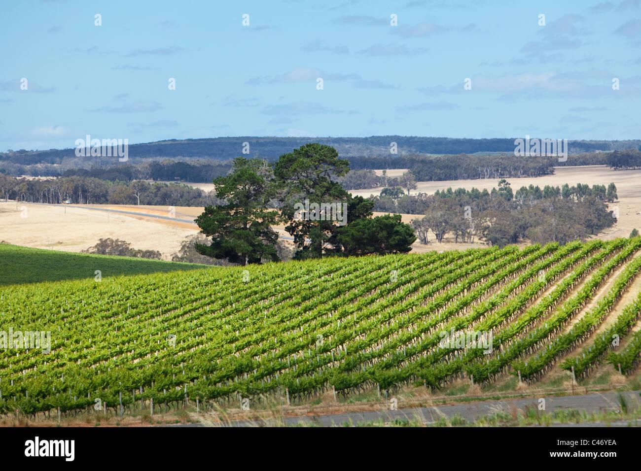Vineyard in the Mt Barker wine region. Mt Barker, Western Australia, Australia Stock Photo