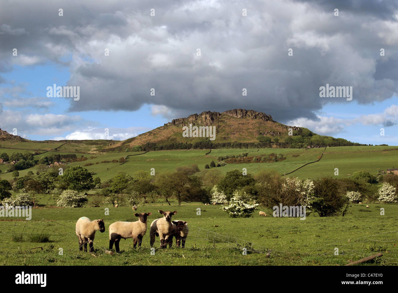 Hen Cloud in The Roaches, stunning gritstone outcrop in the Staffordshire Moorlands. Peak District. England, Great - Stock Image