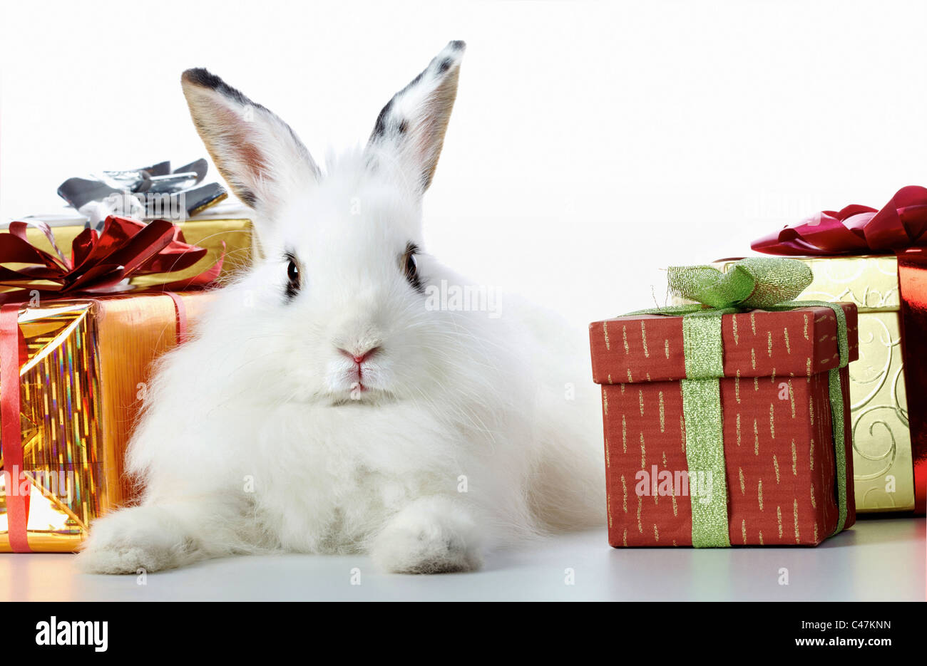 Image of cautious rabbit surrounded by giftboxes - Stock Image