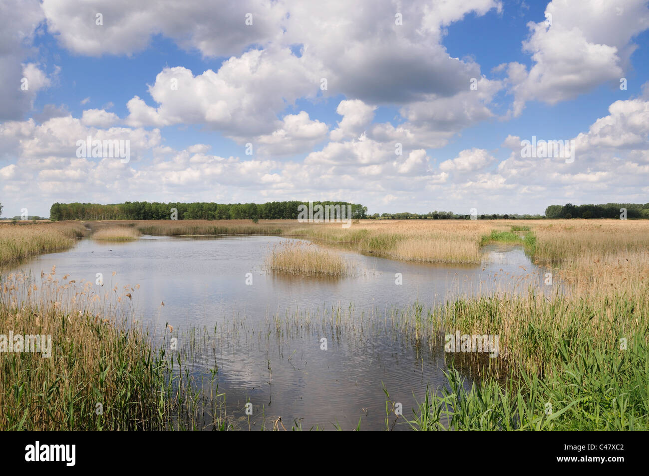 Inland waterway and reedbed, RSPB Lakenheath Fen, Suffolk, England, May - Stock Image
