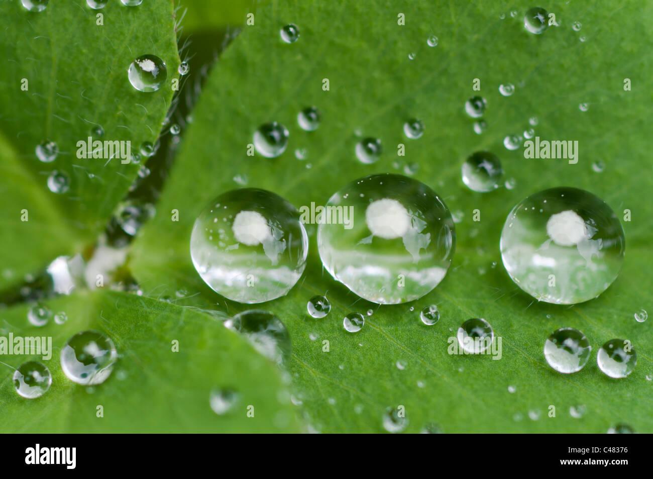 Wassertropfen auf einem Blatt, Rena, Hedmark, Norwegen, waterdrop on a leaf, Norway - Stock Image