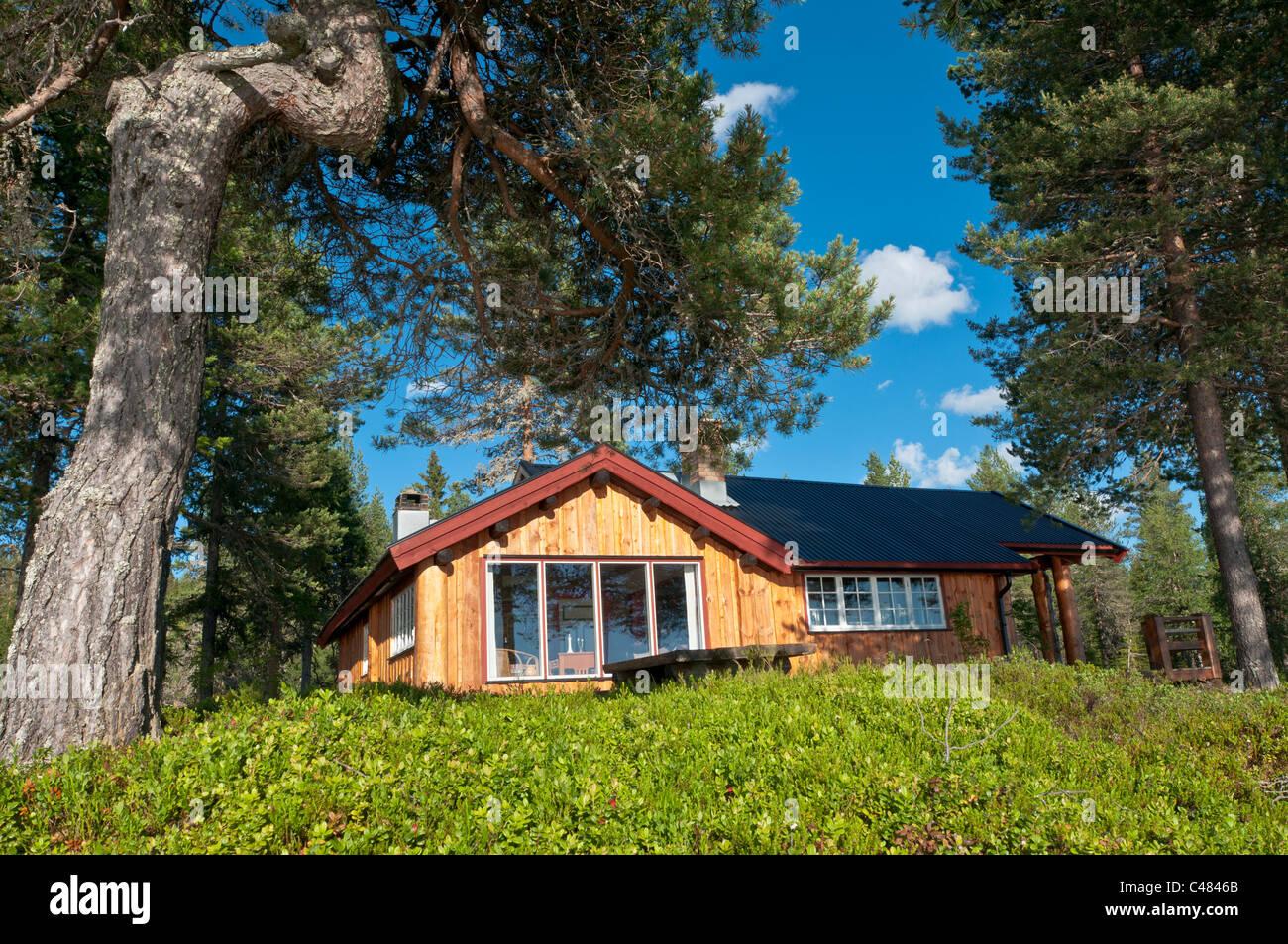 Holzhuette im Wald, Rena, Hedmark, Norwegen, Wooden hut, Wood, Norway Stock Photo