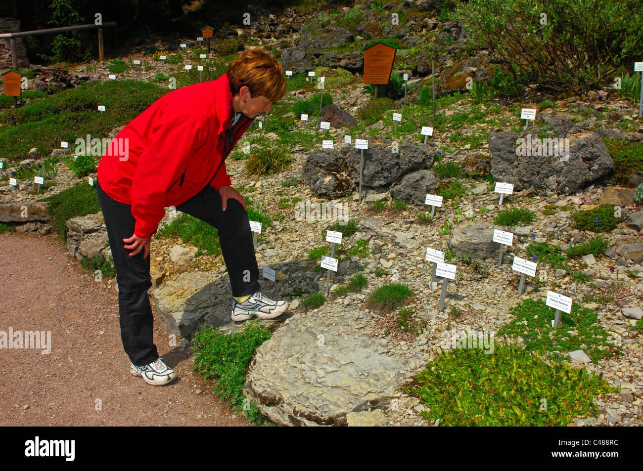 Visitor looking at alpine plants in the garden of mountain flora Rennsteiggarten in Oberhof, Thuringia, Germany Stock Photo