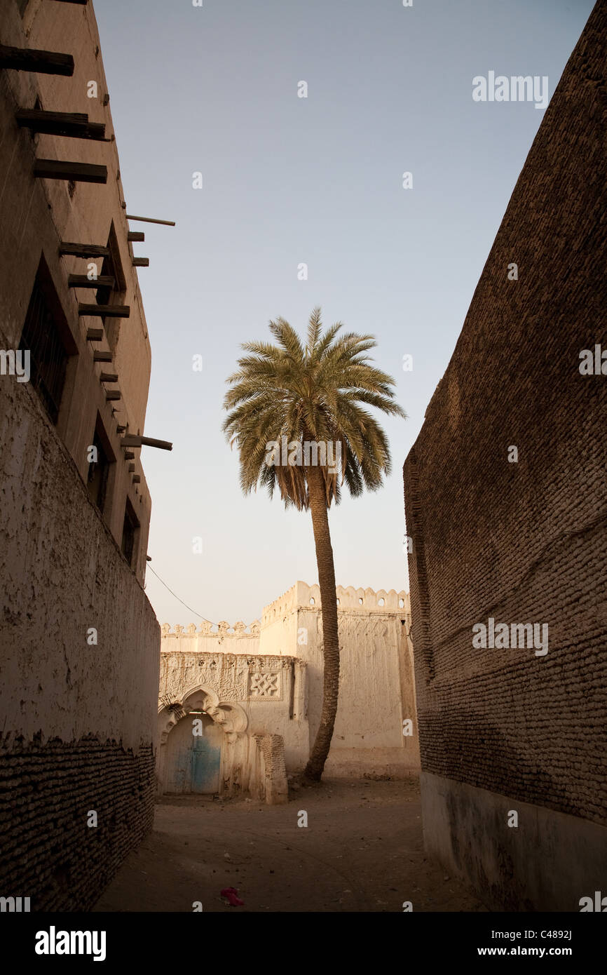 A palm tree in the Old Town of UNESCO listed historical city of Zabid, Yemen. - Stock Image