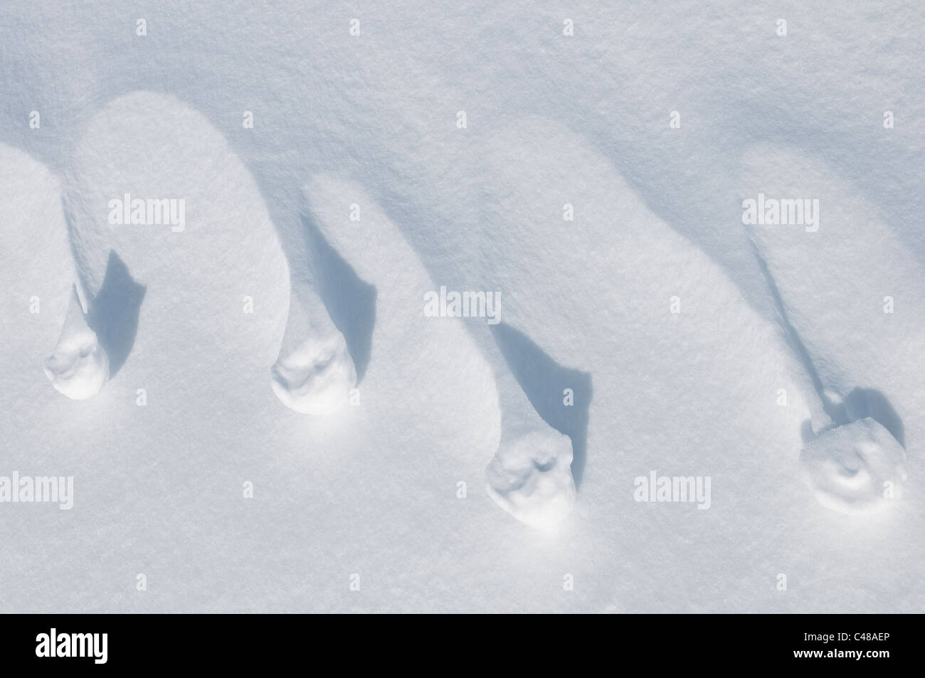 strukturen im Schnee, Norrbotten, Lappland, Schweden; Maerz snow structures detail deflation wind erosion - Stock Image