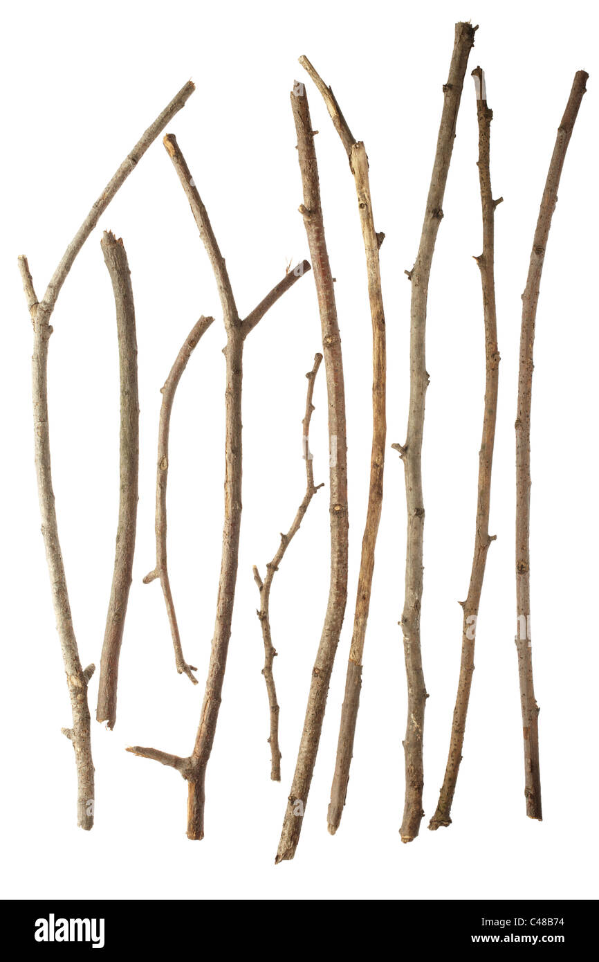 Wooden sticks and twigs Stock Photo