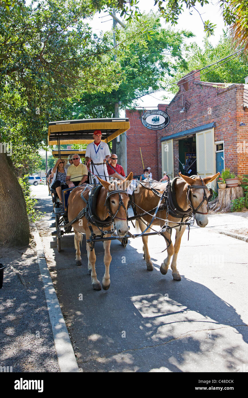 Tourists on a horse and buggy ride of the historic downtown Charleston, South Carolina, USA - Stock Image