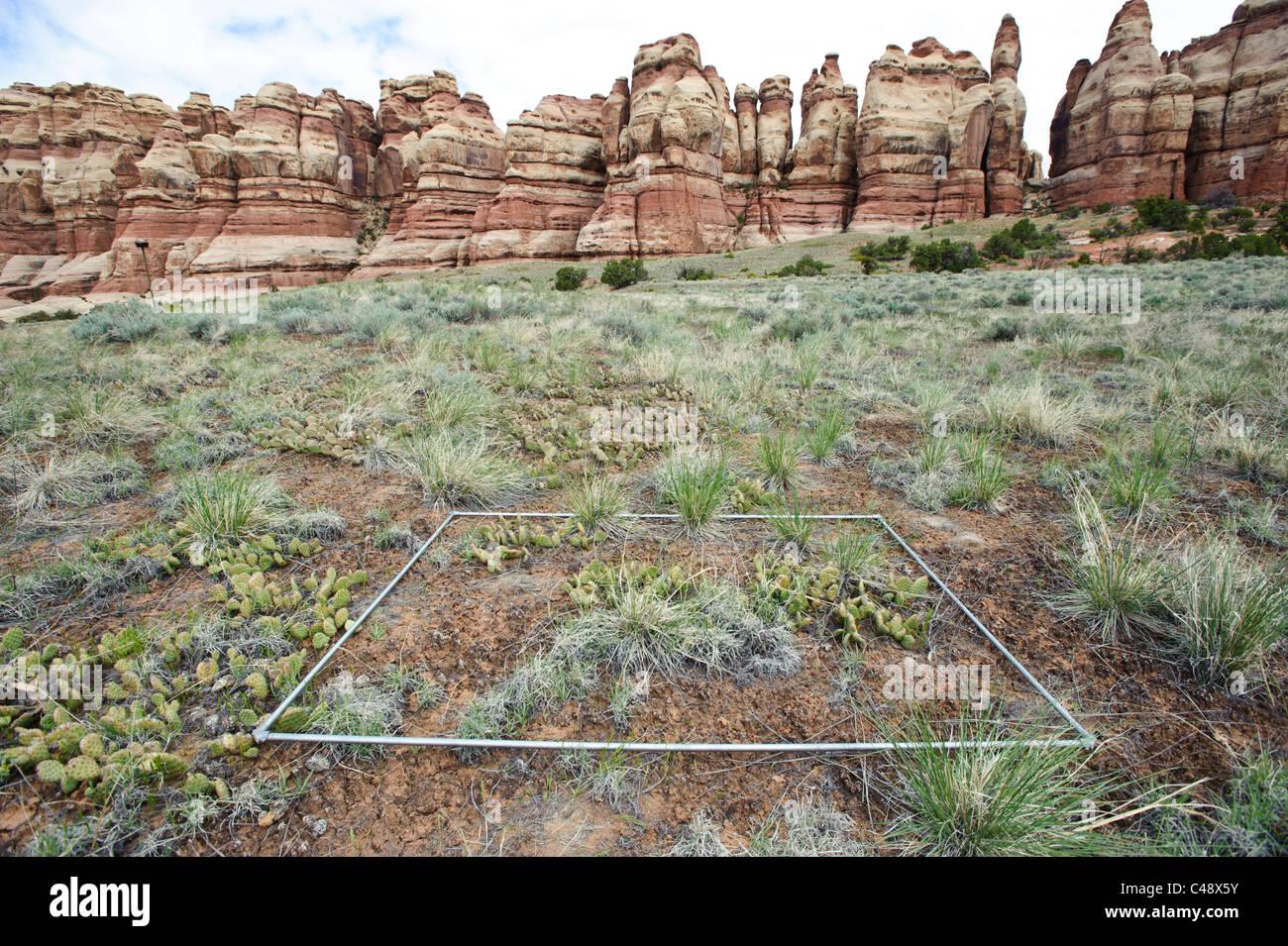 Researcher sets ups rain-out study plot, Needles District, Canyonlands NP, UT - Stock Image