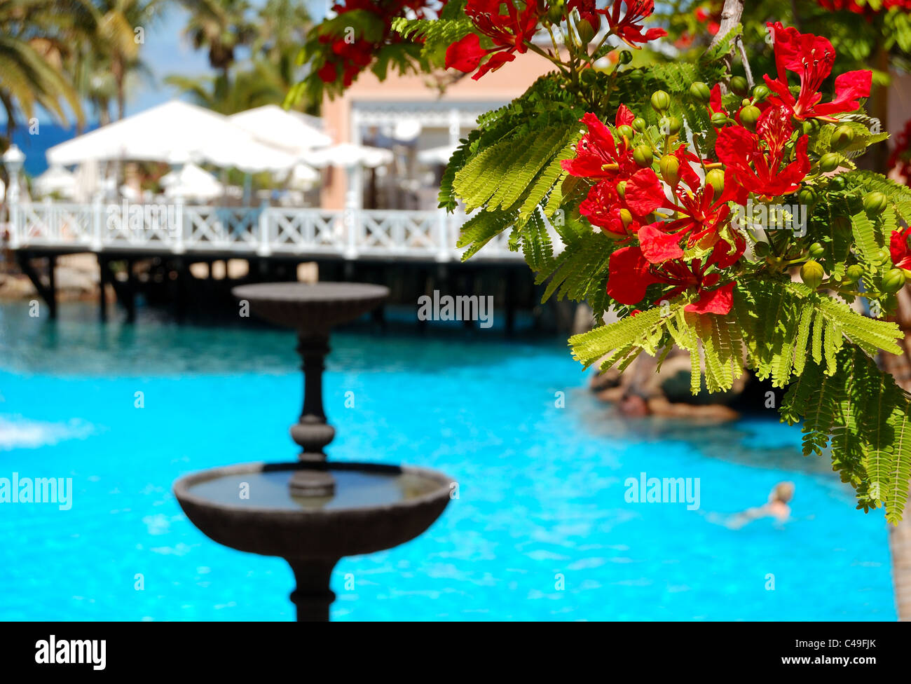 Flowers In Focus At Swimming Pool Open Air Restaurant And Luxury