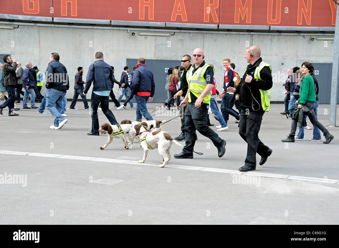 Sniffer dogs with handlers at the Emirates Stadium - Stock Image