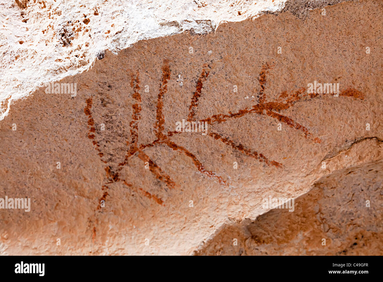 Feather style pictograph Hueco Tanks State Historic Site Texas USA - Stock Image