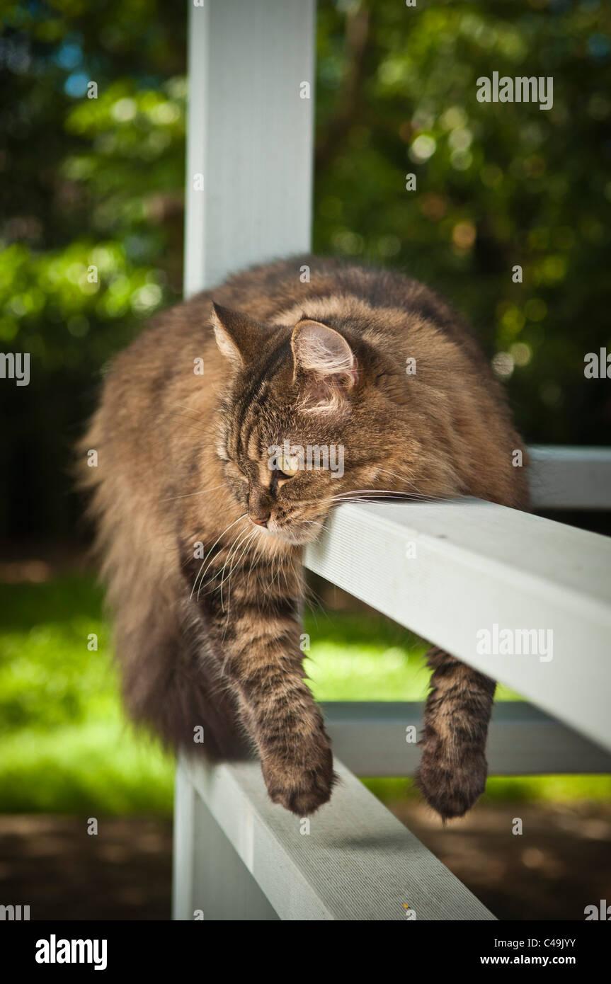 Cat sprawled over railing - Stock Image