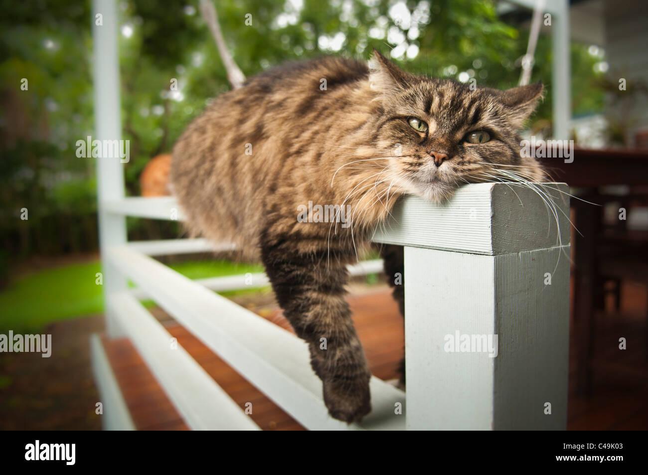 Cat sprawled over railing Stock Photo