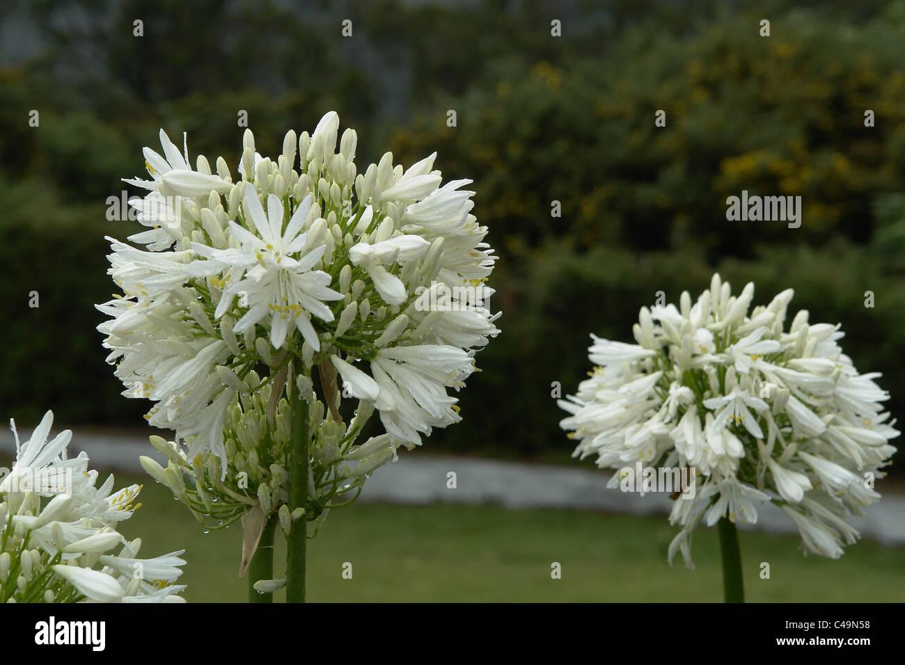 India White Flowers Stock Photos India White Flowers Stock Images