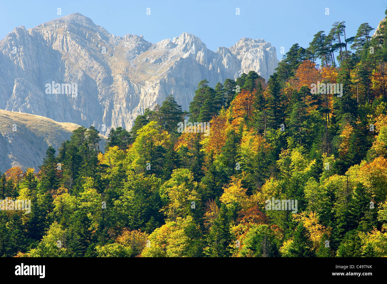 Fall forest in the Pyrenees mountains Stock Photo