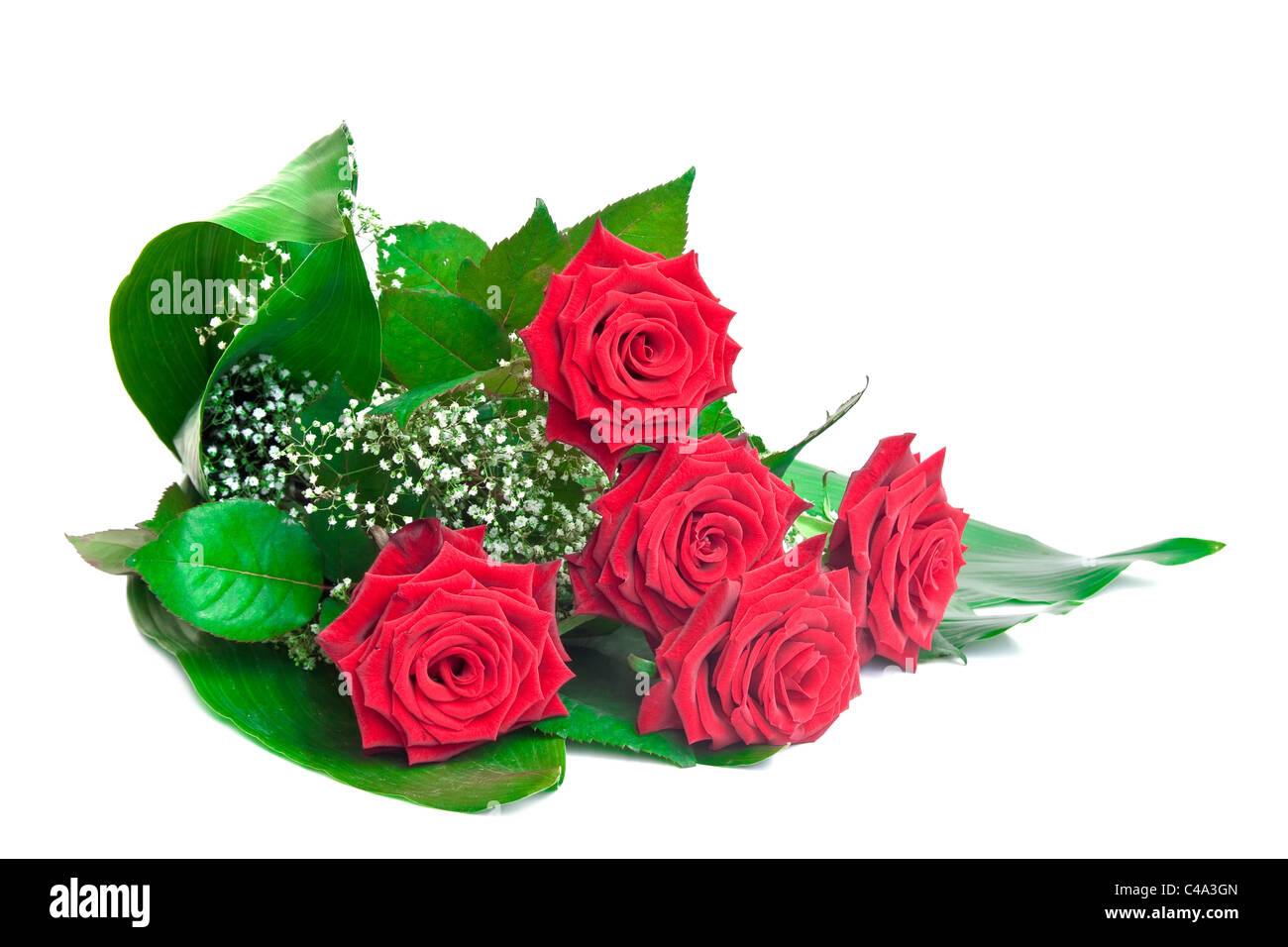Bouquet of red roses isolated on white background. - Stock Image