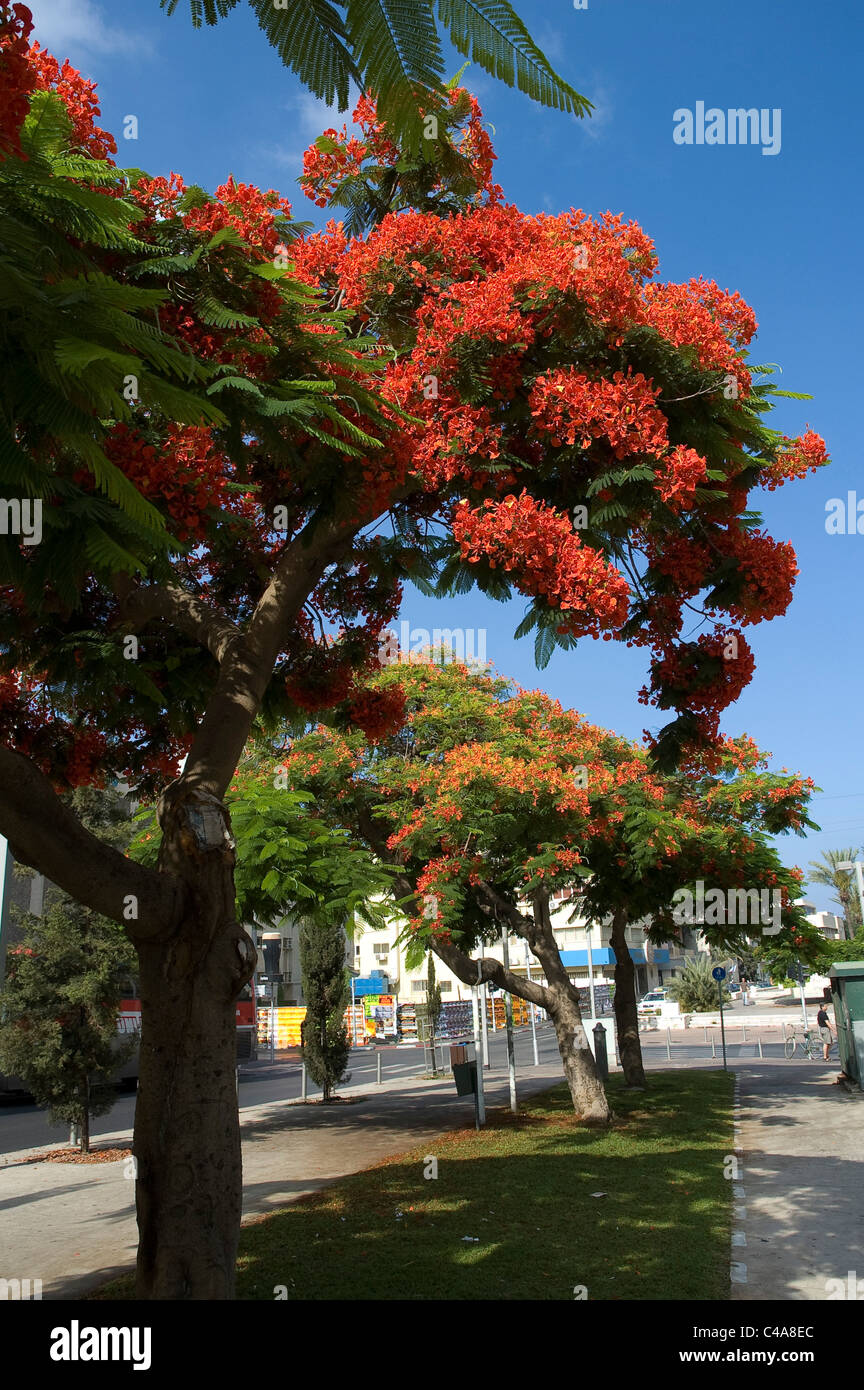 Photograph of the rothschild avenue in central Tel Aviv - Stock Image