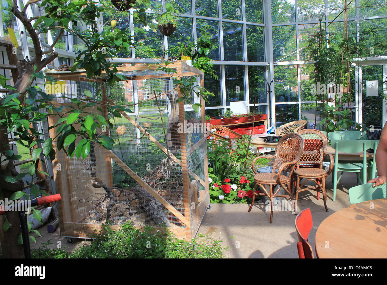 Interior of a cozy conservatory which has a bird cage, plants and couple of chairs in Nørrebro, Copenhagen, - Stock Image