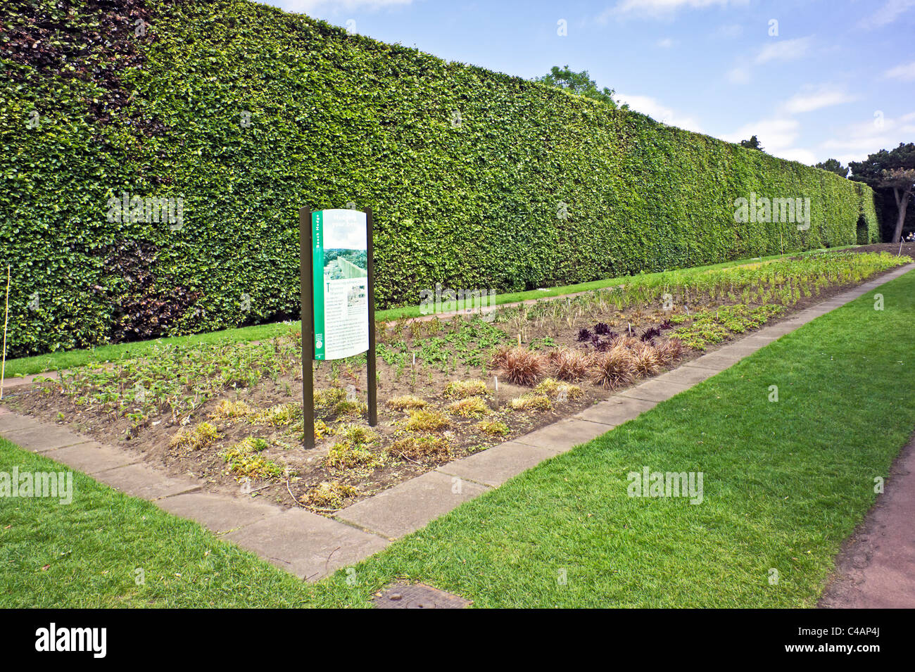 Famous 8 metre high and over 100 years old beech hedge in the Royal Botanic Garden Edinburgh Scotland - Stock Image