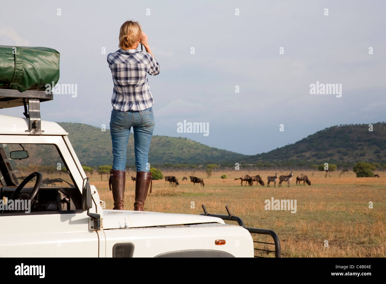 Tanzania, Serengeti. A tourist stands on the bonnet of her Land Rover to look at the wildebeest. MR. Stock Photo