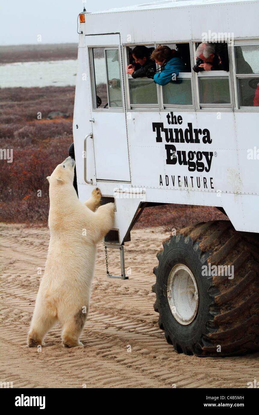 mature-polar-bear-men-galleriestures-fuck-in-a-shop-porn