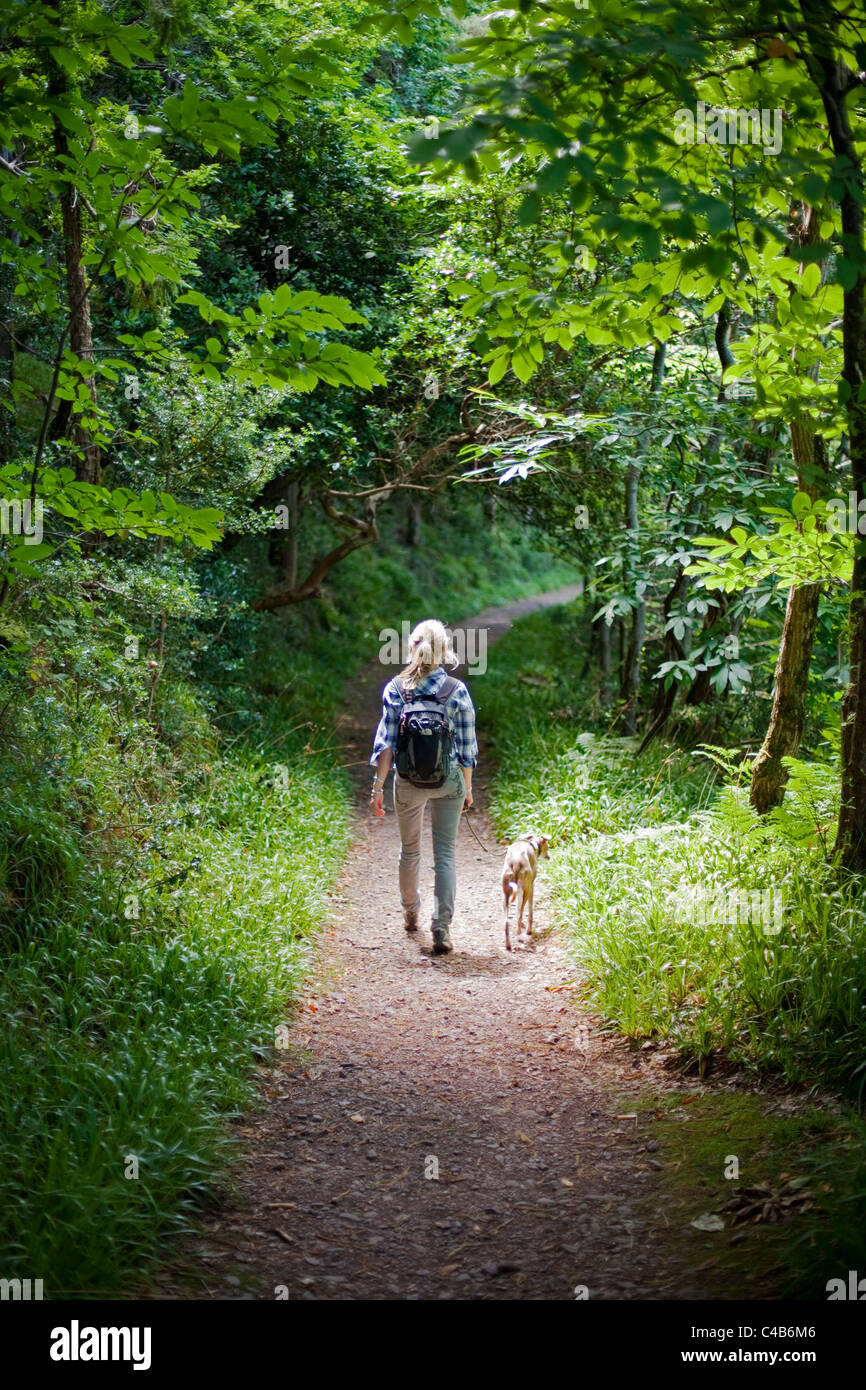 UK, Dorset. A woman walks her dog through the dappled shade of a forest in Dorset. MR. Stock Photo