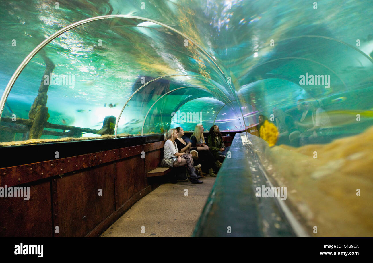England, East Sussex, Brighton, Interior of the Sea Life Centre underground Aquarium on the seafront, curved glass - Stock Image
