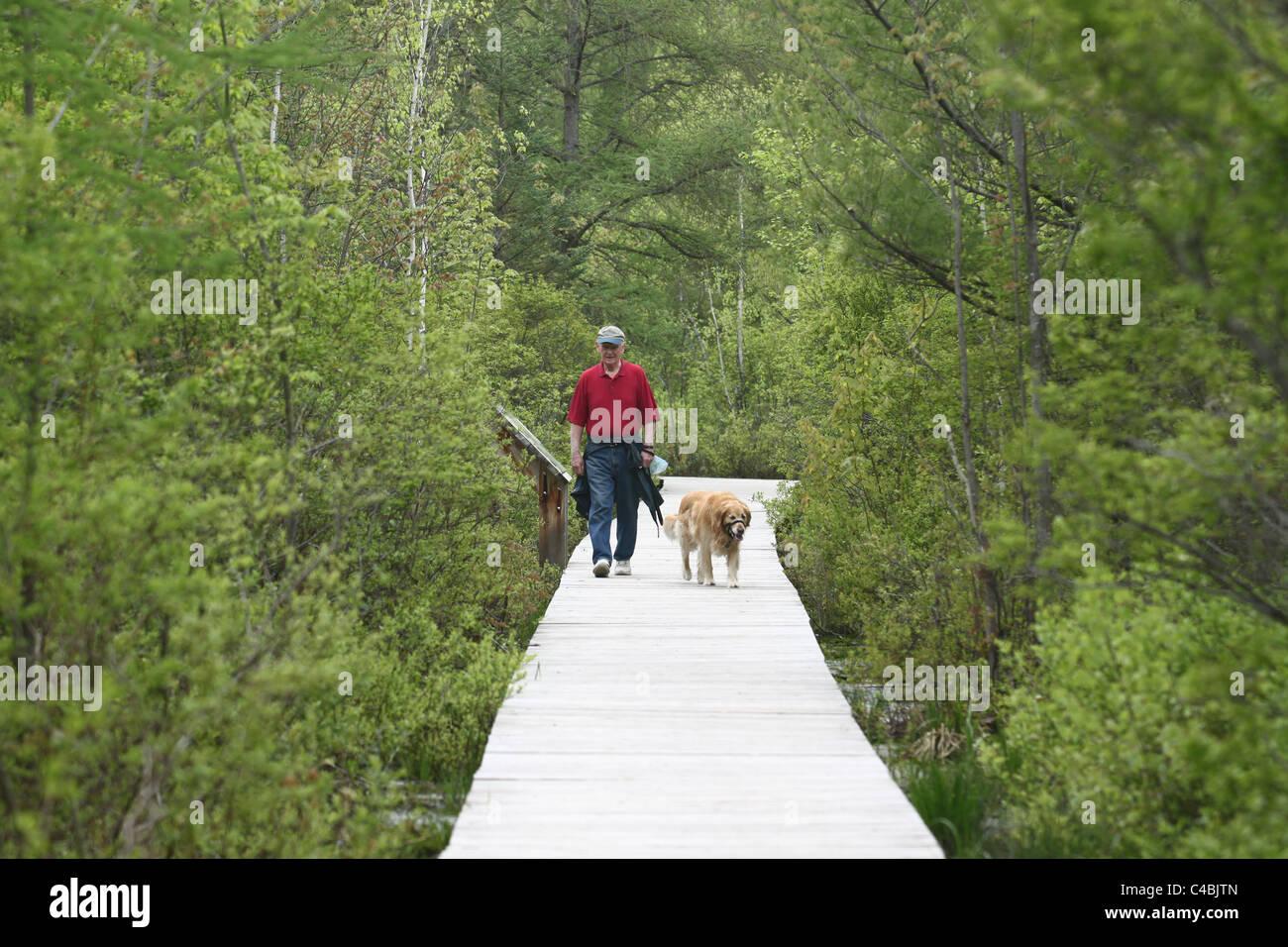 One man in red shirt walking golden lab dog in wilderness Stock Photo