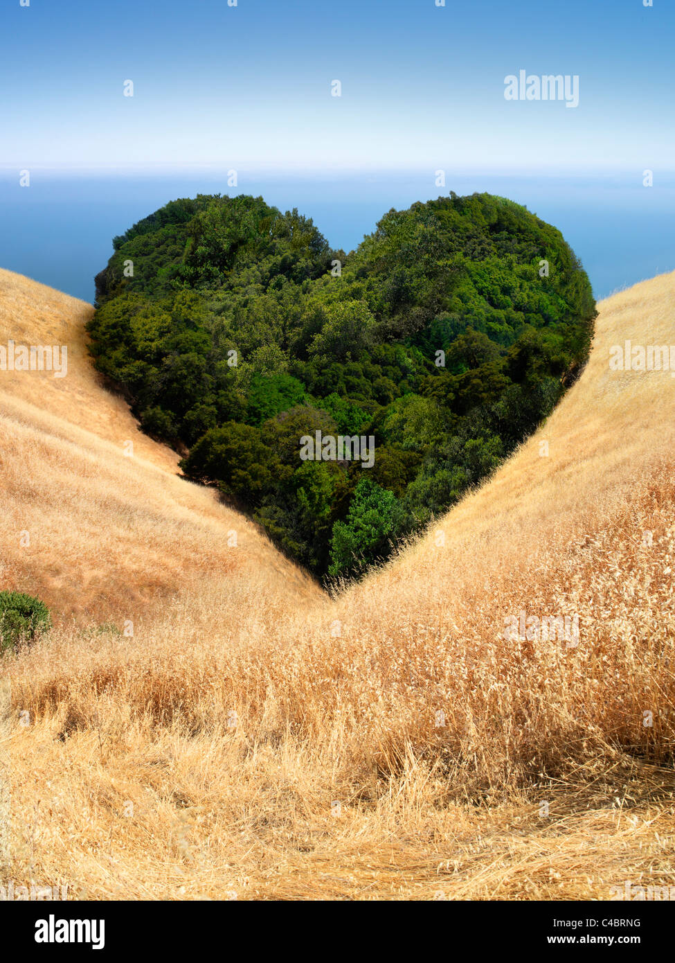 Landscape of trees in field that form the shape of a heart - Stock Image