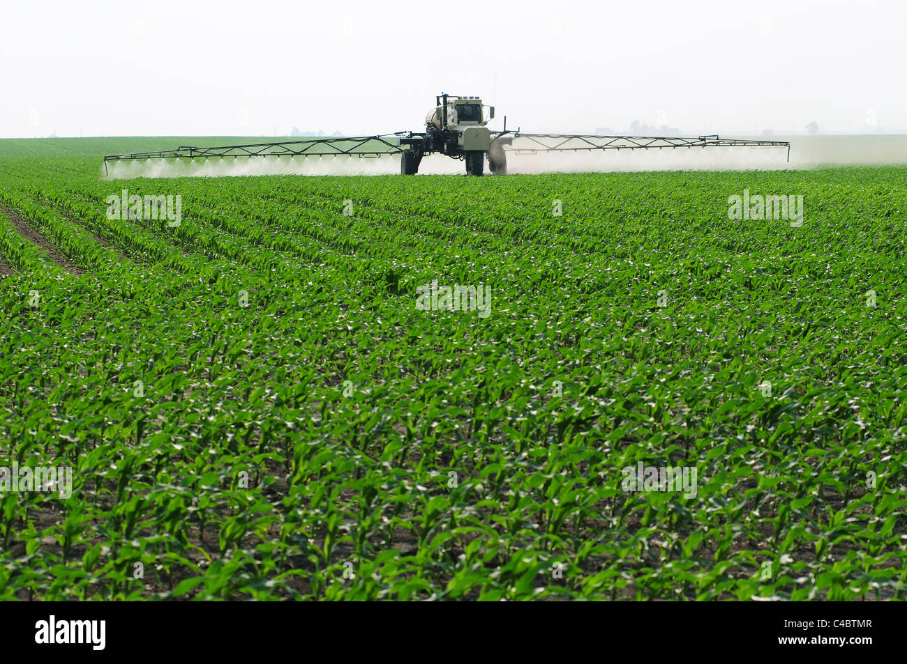 A self propelled crop sprayer treating a corn field with insecticide or herbicide - Stock Image