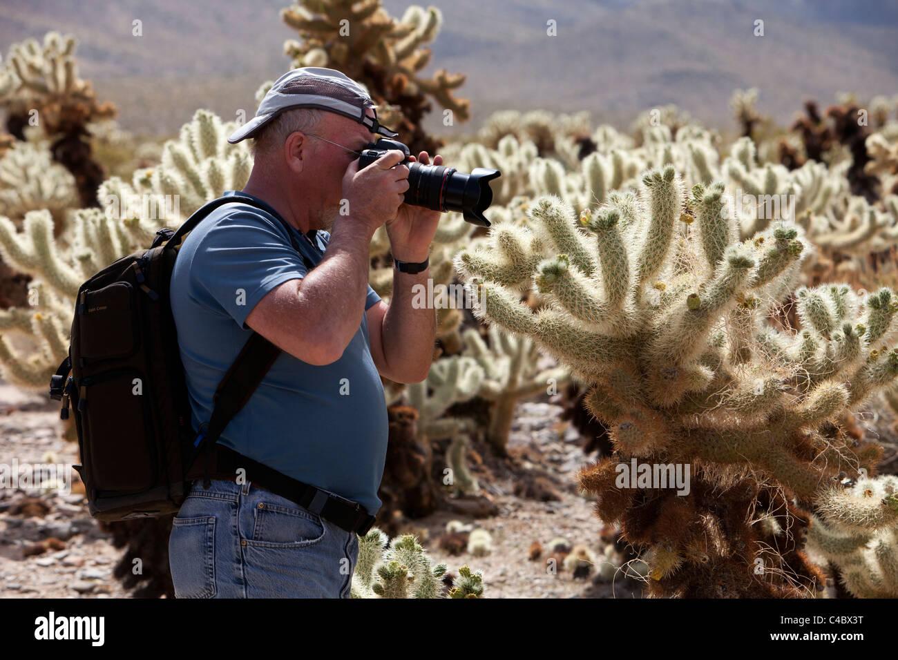 Cactus man stock photos cactus man stock images alamy - Cholla cactus garden joshua tree ...