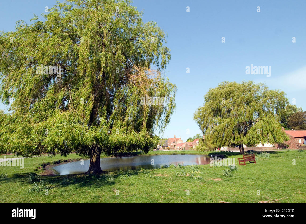 english village green common land picturesque traditional nun moor monkton north yorkshire pond willow trees Stock Photo