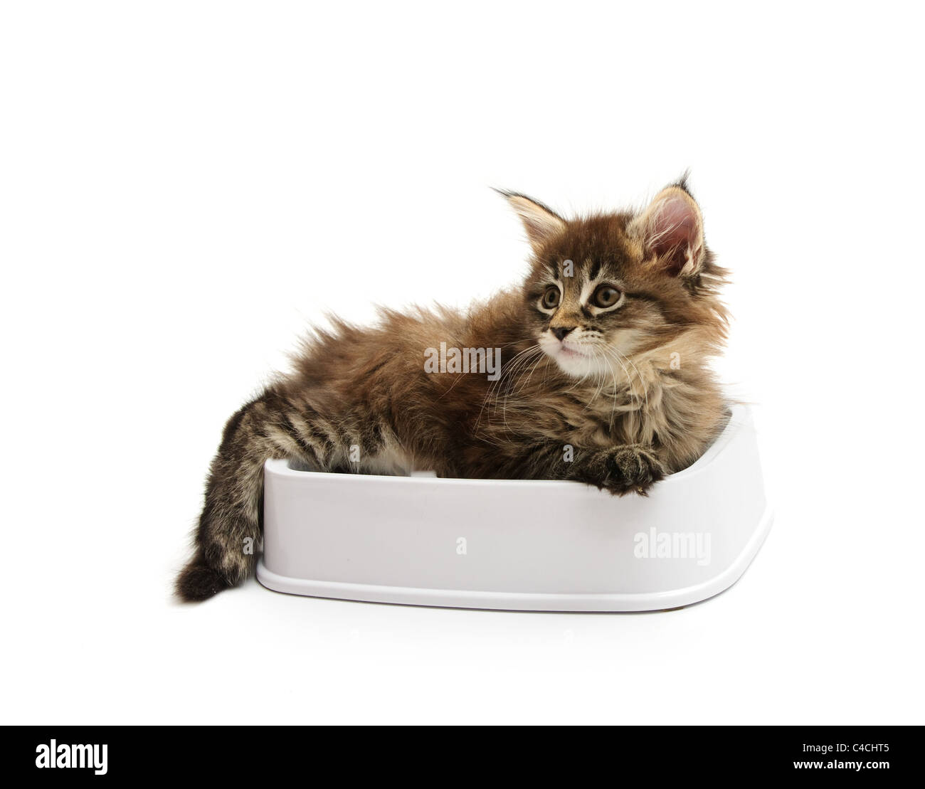 The kitten lies in a bowl against white background - Stock Image