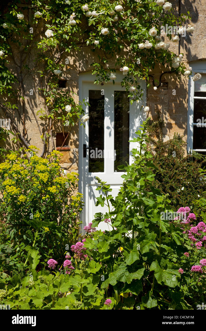 white wooden doorway of english cottage with wall climbing white roses england - Stock Image