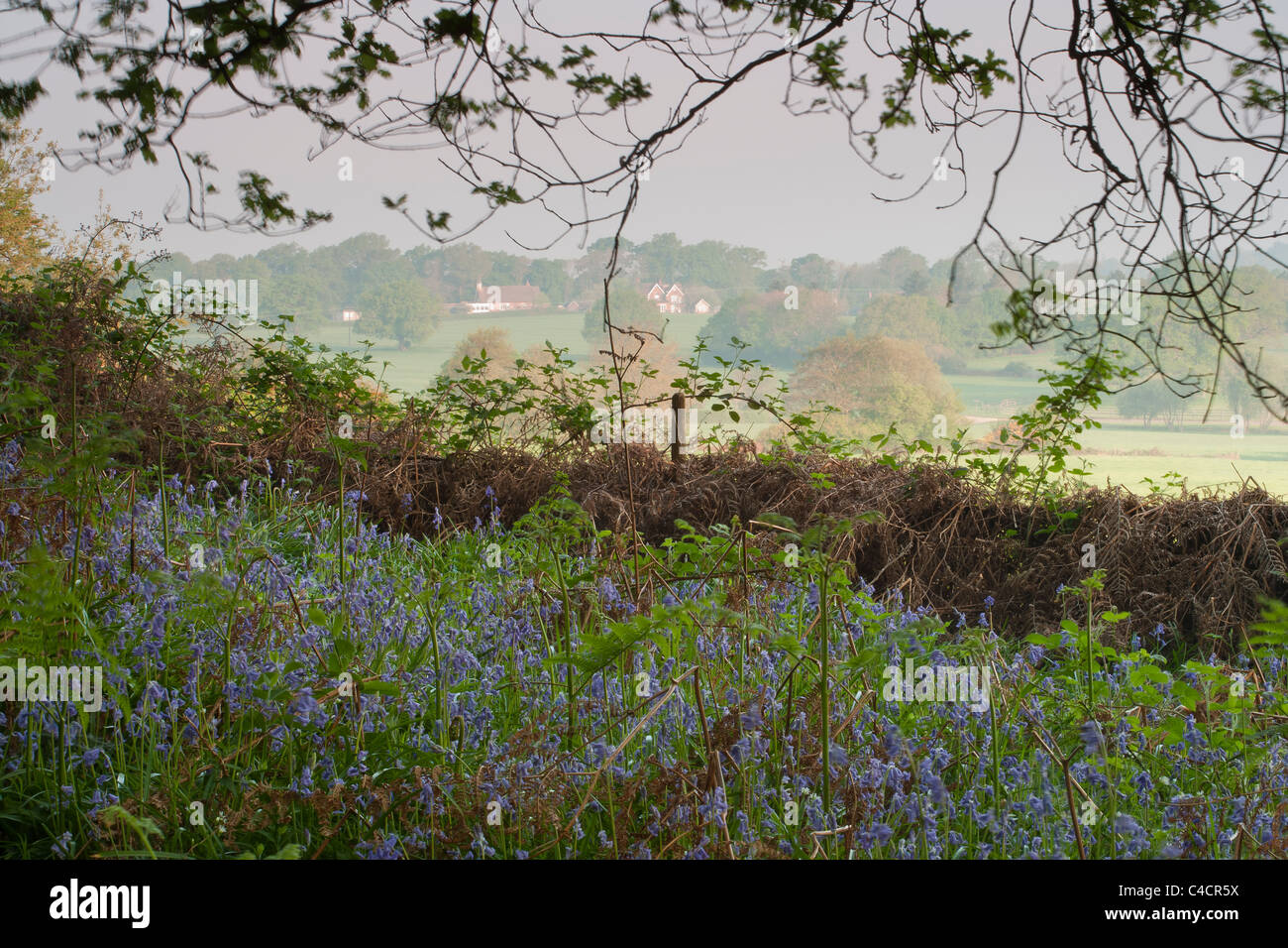 English countryside in Spring, with bluebell woods and rolling hills and fields. - Stock Image