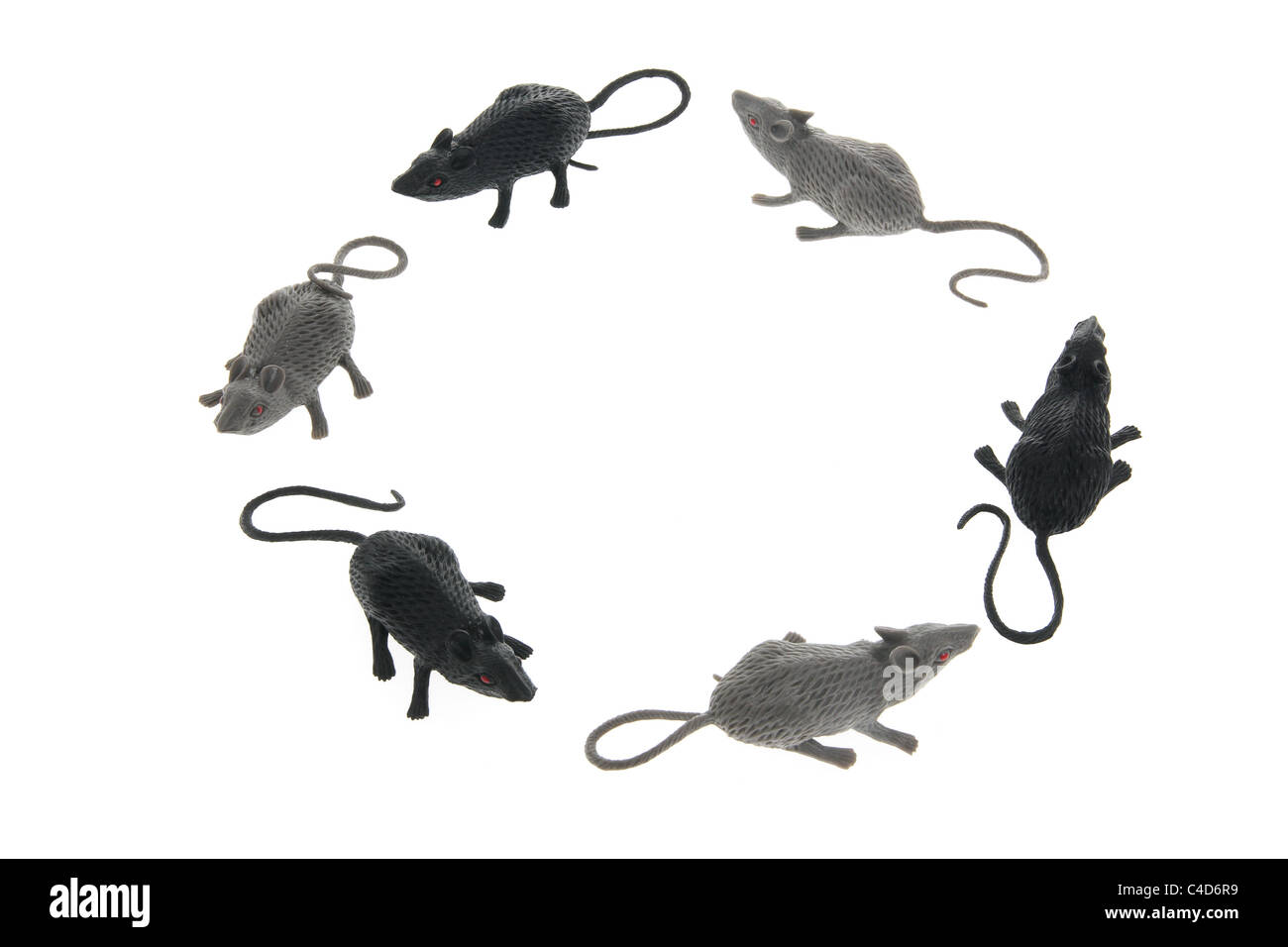 Circle of Toy Rats - Stock Image