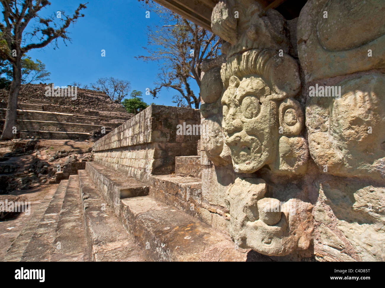 Face of Jaguar Sun God of Underworld on western stairway of East Court of Mayan ruin of Copan - Stock Image