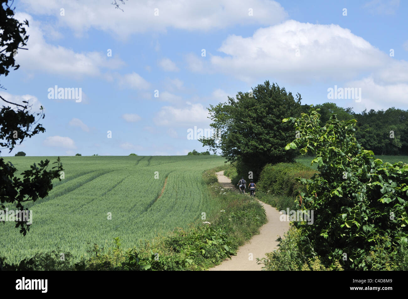 Path by the wheat field in the English countryside. - Stock Image