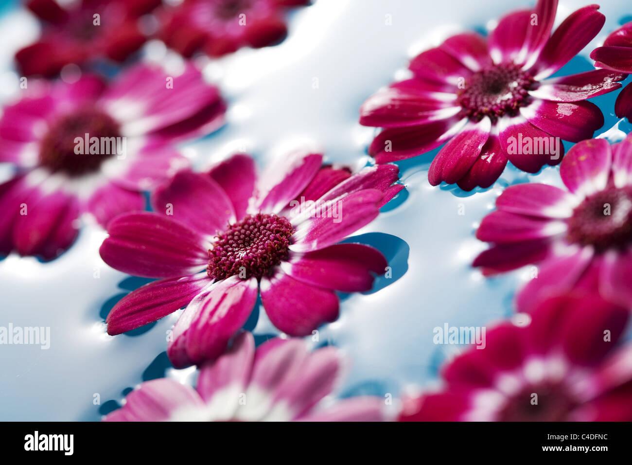 floating flowers Stock Photo: 37177096 - Alamy