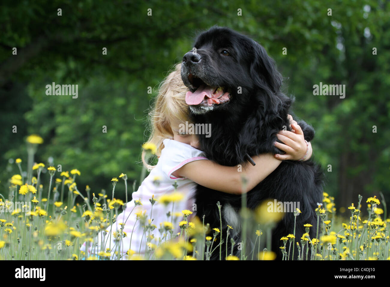 A young girl hugs her dog in a field of flowers. - Stock Image